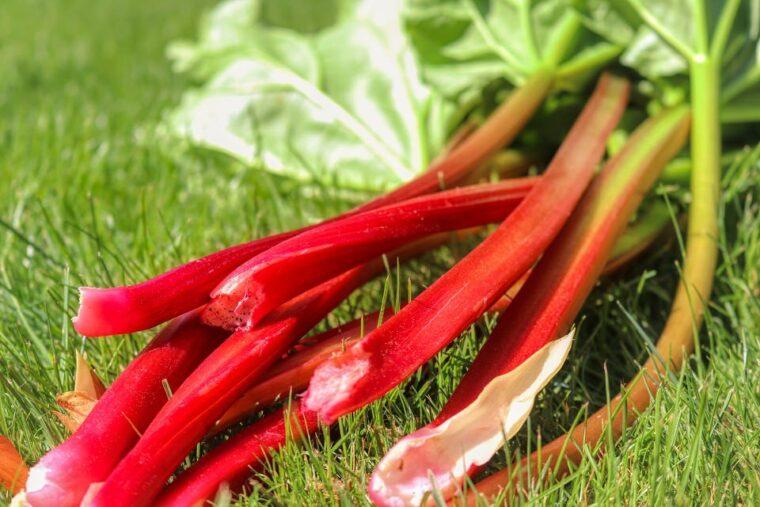 rhubarb-samune