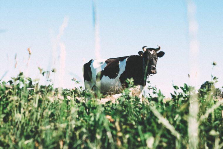 milkland